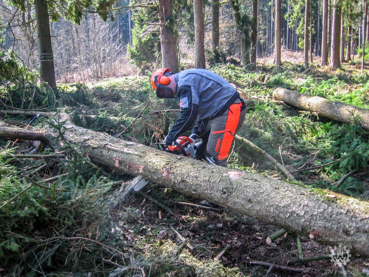 Lehrgang Baumschneiden