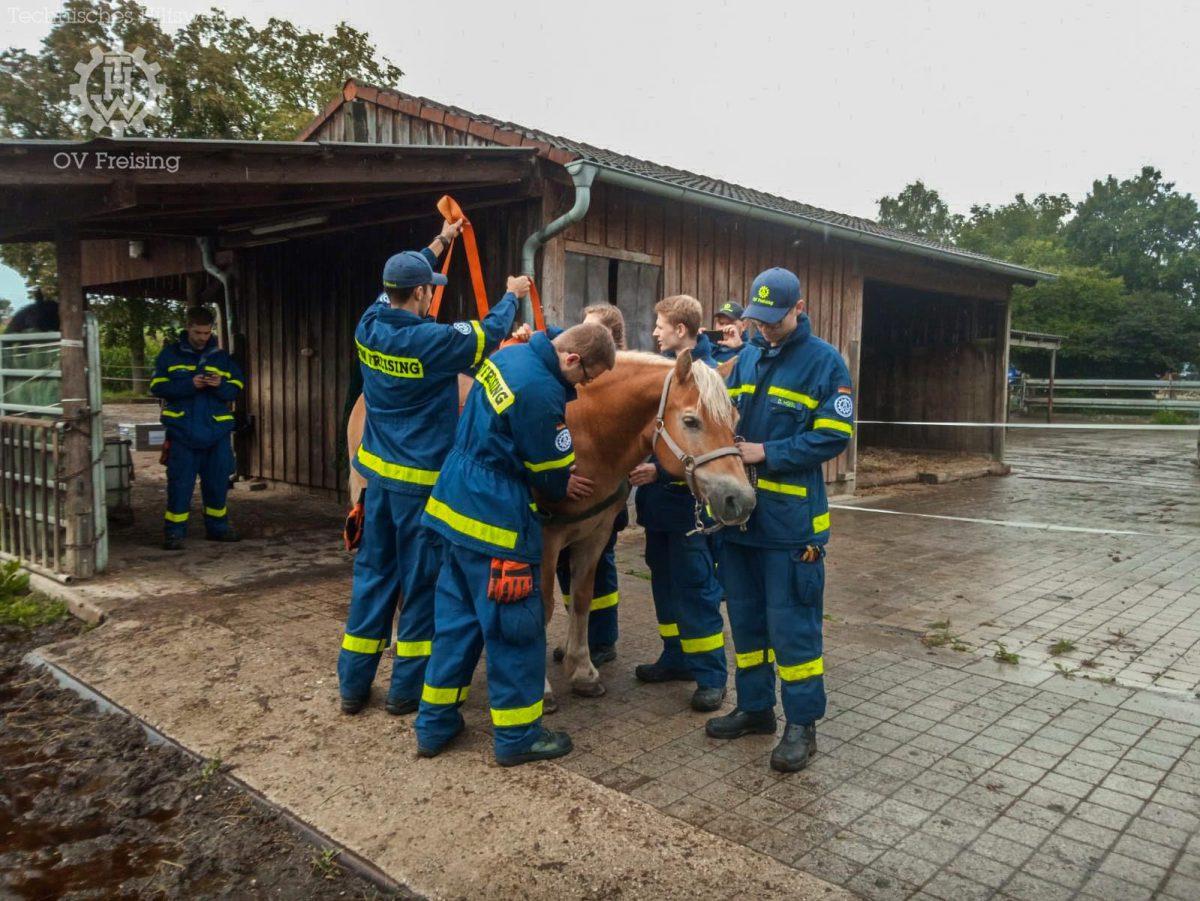 THW Freising beübt neues Tierrettungsgeschirr
